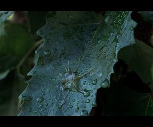 some hot gelatinous goo alien-on-plant action in 1978's Invasion of the Body Snatchers