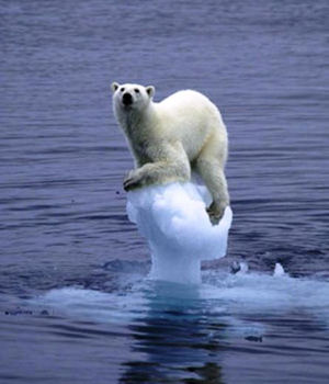 A polar bear on a tiny iceberg